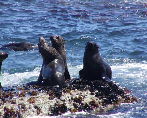 Seal-Island-1-500x400