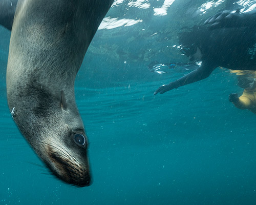 Snorkelingwithseals_e