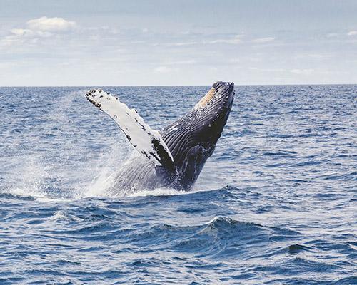 WhaleWatching_e